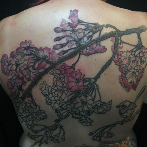 Work in Progress – Cherry Blossom and Superb Fairywren